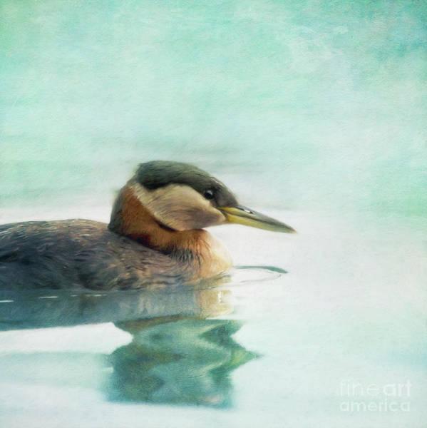 Waterbird Photograph - Water Fowl by Priska Wettstein