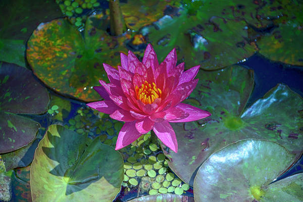 Claude Monet Photograph - Water Garden Lily by Don Columbus