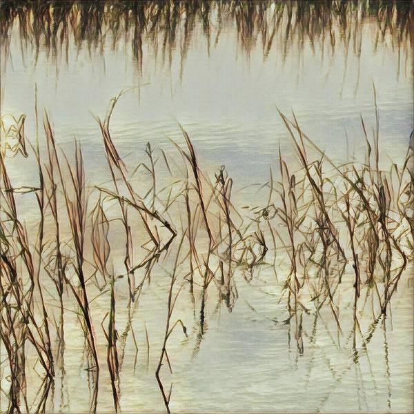 Photograph - Water Grass by Robert Knight
