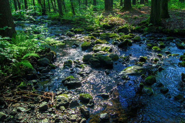 Photograph - Water In A Dark Forest by Sun Travels