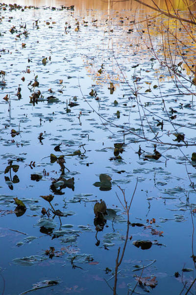 Photograph - Water Lilies Autumn Song by Lon Dittrick