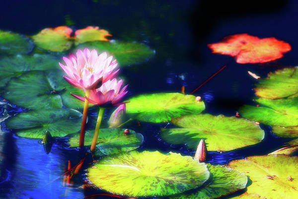 Photograph - Water Lilies by Harry Spitz
