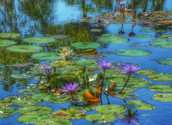 Red Wall Art - Photograph - Water Lilies I by Kathi Isserman