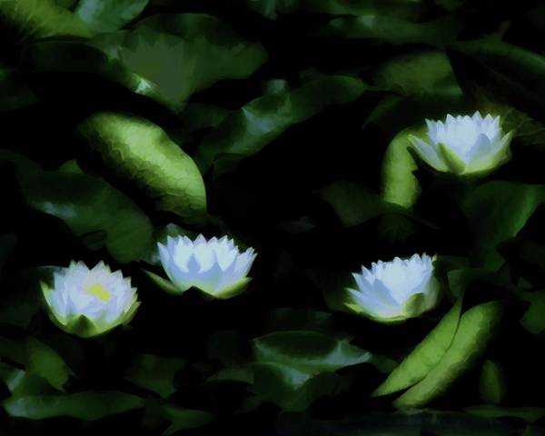 Digital Art - Water Lilies In Bloom by John Feiser