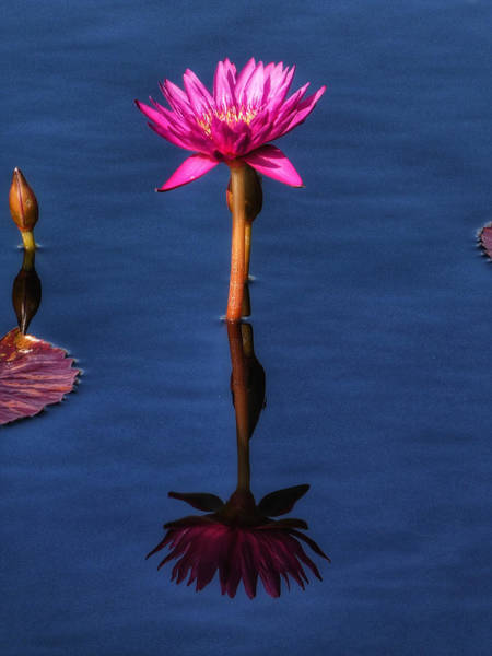 Red Wall Art - Photograph - Water Lilies V by Kathi Isserman
