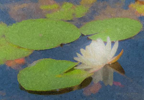 Painting - Water Lilly At Borderland by Bill McEntee