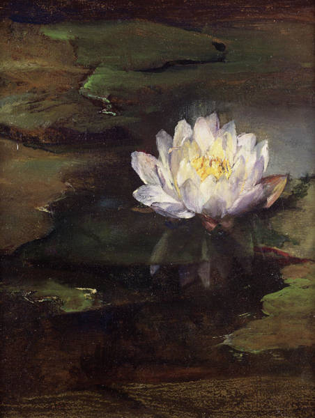 Lilly Pad Wall Art - Painting - Water Lilly by John La Farge
