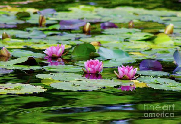 Wall Art - Photograph - Water Lily Pond by Gregory E Dean