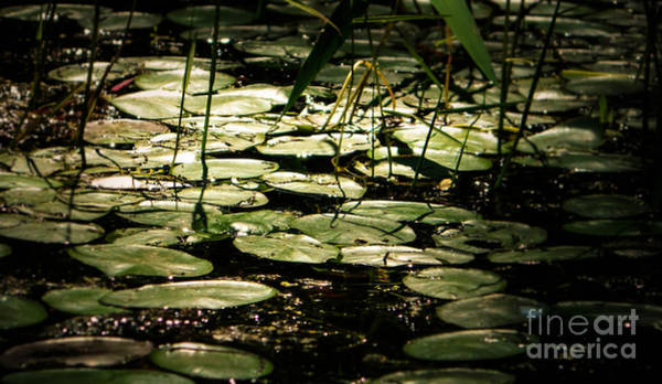 Photograph - Water Lily by Andrea Anderegg