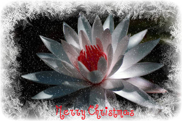 Digital Art - Water Lily Christmas by Donna Bentley