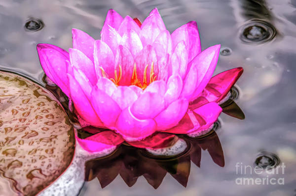 Digital Art - Water Lily In The Rain by Ed Taylor