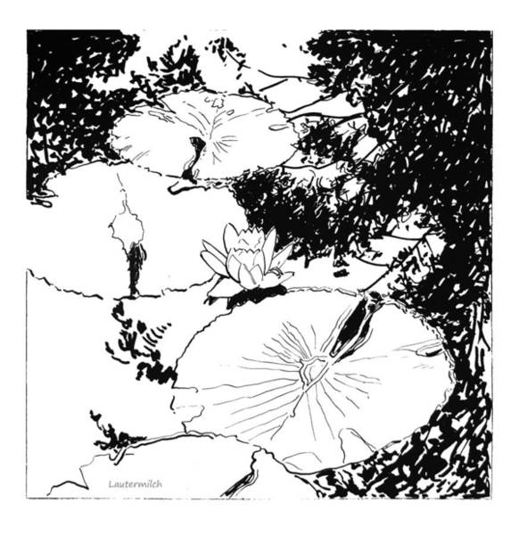 Wall Art - Drawing - Water Lily Ink Drawing by John Lautermilch