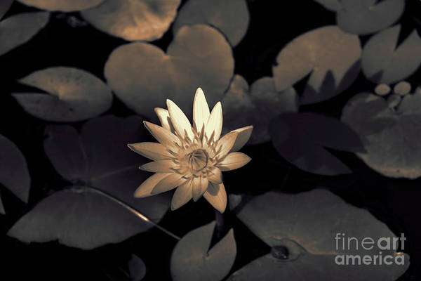 Photograph - Water Lily by Jeff Breiman