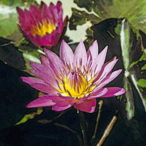 Photograph - Water Lily by Maria Heyens