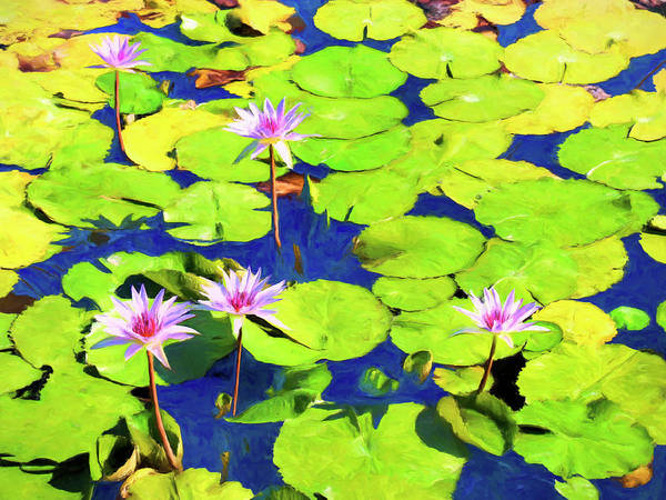 Painting - Water Lily Pond 2 by Dominic Piperata