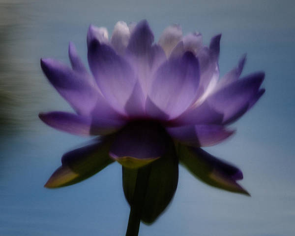 Wall Art - Photograph - Water-lily Reflection  by Don Schroder