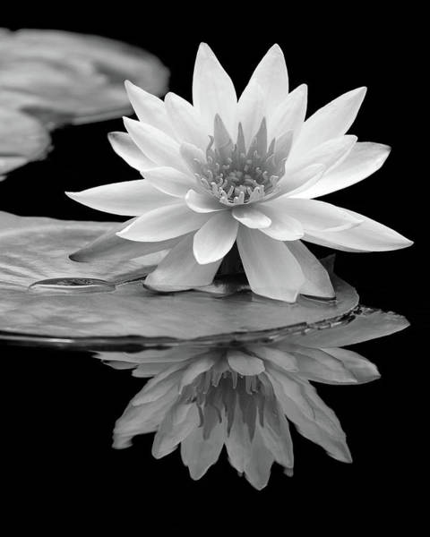 Water Lily Reflections I Art Print