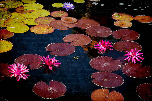 Photograph - Water Lily World by Milena Ilieva
