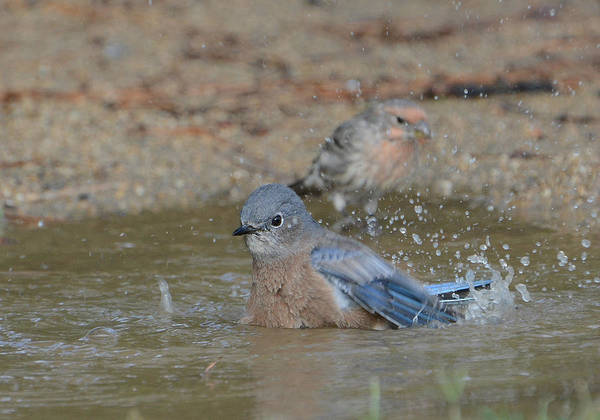 Photograph - Water Play by Fraida Gutovich