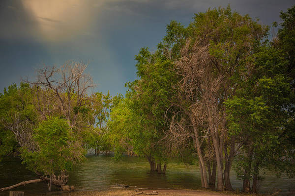 Photograph - Water Refuge by Janice Bennett