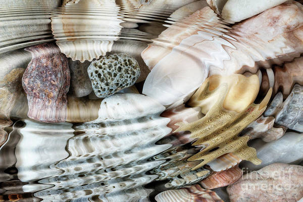 Wall Art - Digital Art - Water Ripples Above Pebbles And Seashells by Michal Boubin