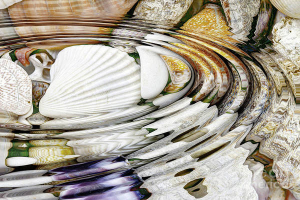 Wall Art - Photograph - Water Ripples Above Sea Shells by Michal Boubin