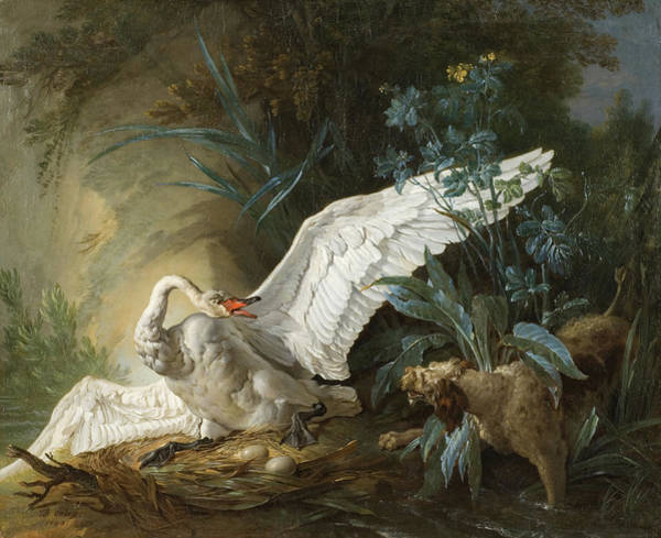 Elegant Dog Painting - Water Spaniel Surprising A Swan On Its Nest by Jean-Baptiste Oudry