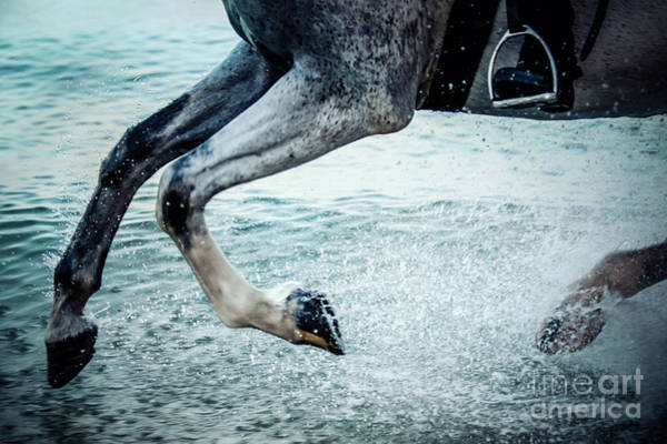 Photograph - Water Splash Horse Legs Galloping On The Water by Dimitar Hristov