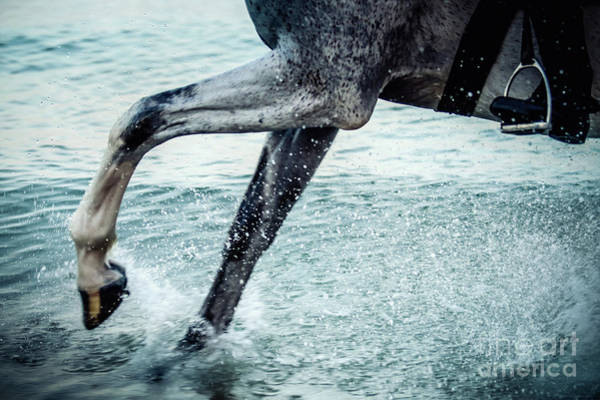 Photograph - Water Splash Horse Legs In The Sea Water by Dimitar Hristov