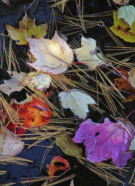 Photograph - Fall Spectacle by Lynda Lehmann