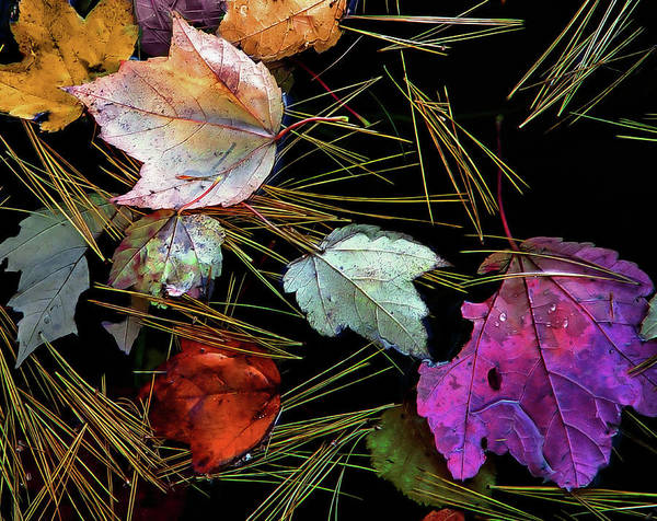 Photograph - Water Tapestry by Lynda Lehmann
