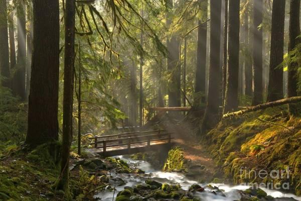 Photograph - Water Under The Rainforest Bridge by Adam Jewell