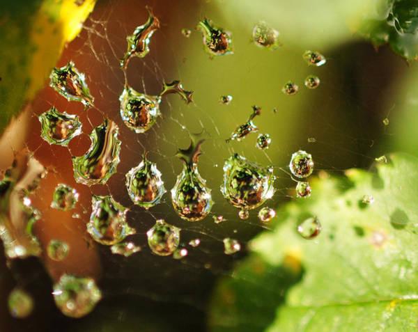 Photograph - Water Universe by Lara Ellis