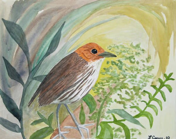 Painting - Watercolor - Antpitta In The Rainforest by Cascade Colors
