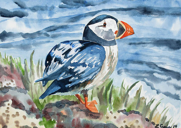 Painting - Watercolor - Atlantic Puffin Preparing To Fly by Cascade Colors