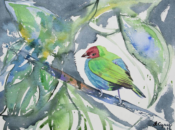 Painting - Watercolor - Bay-headed Tanager by Cascade Colors