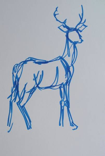 Drawing - Watercolor Blue Line Drawing Of Deer With Antlers by Mike Jory