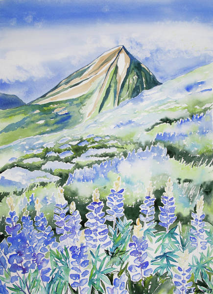 Painting - Watercolor - Crested Butte Lupine Landscape by Cascade Colors