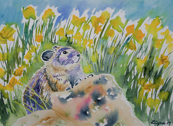 Painting - Watercolor - Curious Pika by Cascade Colors