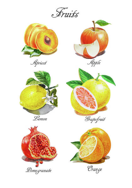 Wall Art - Painting - Watercolor Fruit Illustration Collection I by Irina Sztukowski