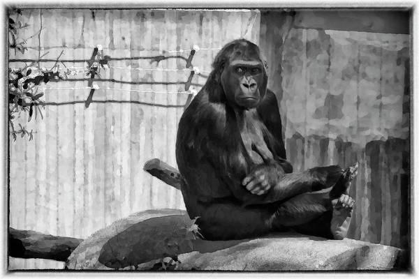 Photograph - Watercolor Gorilla by Joan Carroll