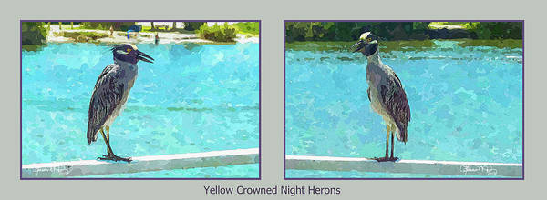 Photograph - Watercolor Herons 2 Of 4 by Susan Molnar