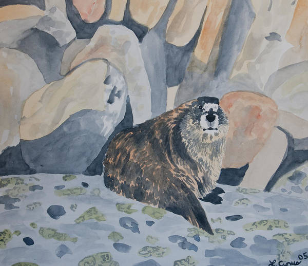 Painting - Watercolor - Hoary Marmot by Cascade Colors
