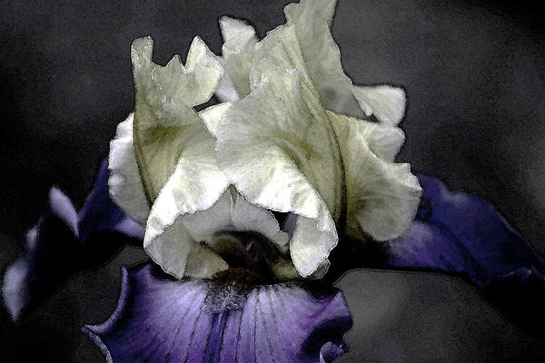 Photograph - Watercolor Iris 6622 W_2 by Steven Ward