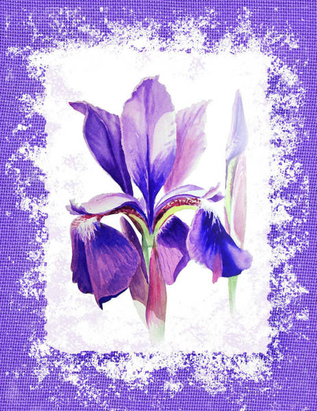 Painting - Watercolor Iris Painting by Irina Sztukowski