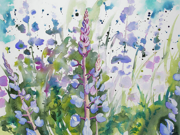 Painting - Watercolor - Lupine Wildflowers by Cascade Colors