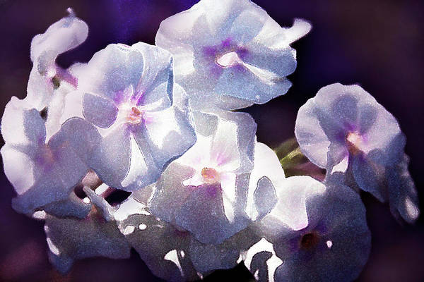Floristry Photograph - Watercolor Phloxes by Margarita Buslaeva