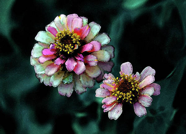 Photograph - Watercolor Pink Zinnias And Smoke 2227 W_2 by Steven Ward
