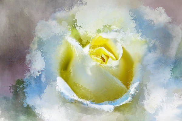 Wallpaper Mixed Media - Watercolor Rose by Terry Davis