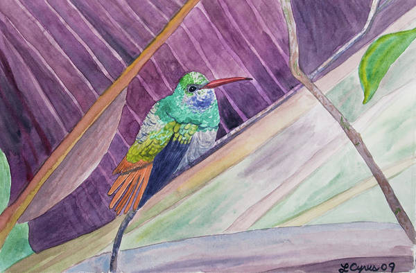 Painting - Watercolor - Rufous-tailed Hummingbird by Cascade Colors